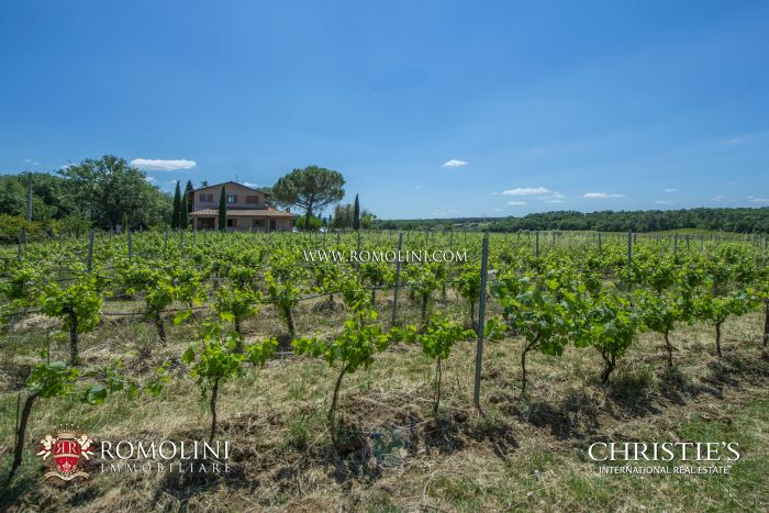 FARM WITH 13 HA VINEYARD FOR SALE ON THE TRASIMENO LAKE, UMBRIA